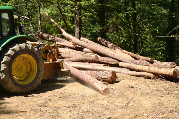 Gestionamos todo el ciclo de actividad forestal